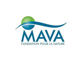 mava-foundation-logo